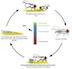 Drosophila model