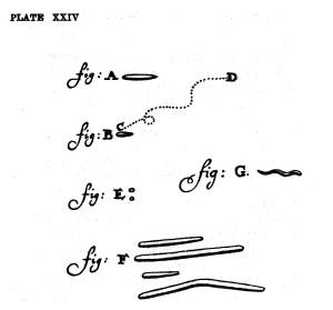 o_Leeuwenhoek