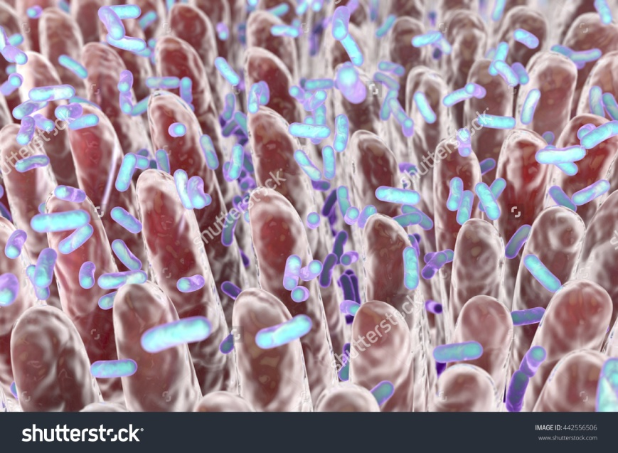 stock-photo-human-intestine-with-intestinal-bacteria-d-illustration-442556506